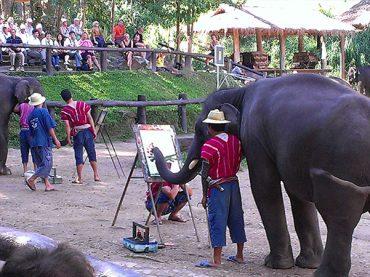 Elephant Camps, Chiang Mai